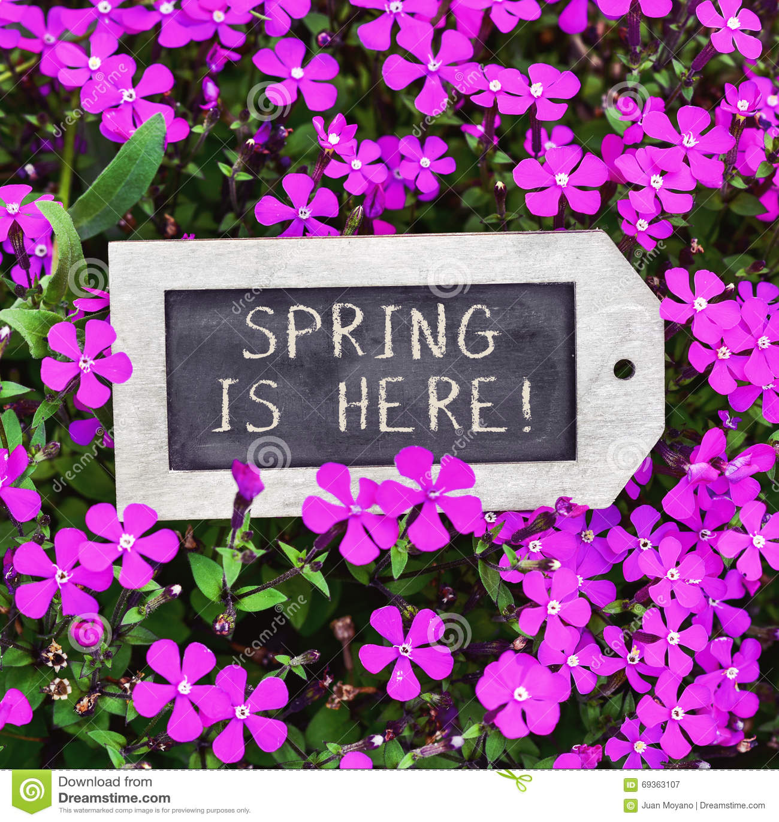 8d5a5201c3e9 El primer de una pizarra etiqueta-formada con la primavera del texto aquí  se coloca entre muchos wildflowers rosados