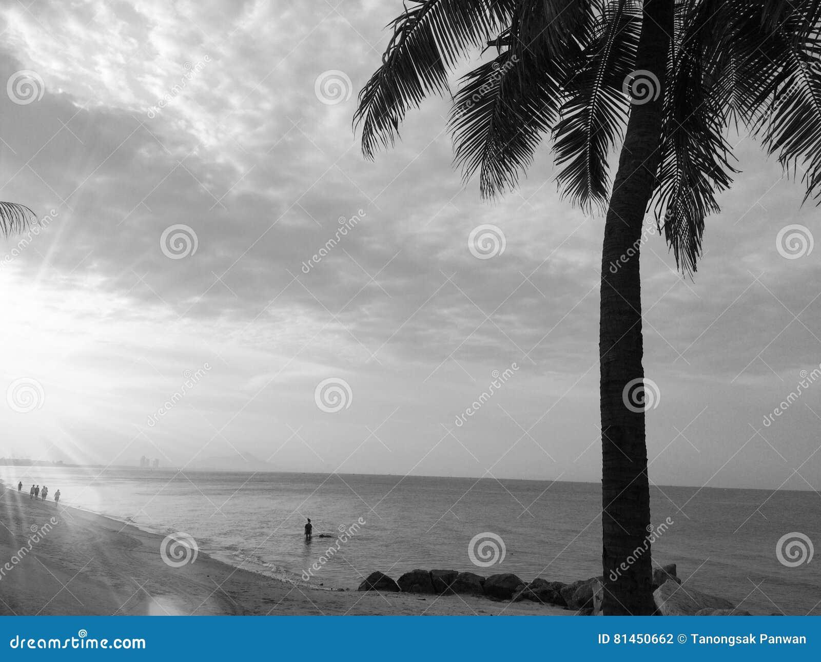 La plage à l arrière-plan noir et blanc