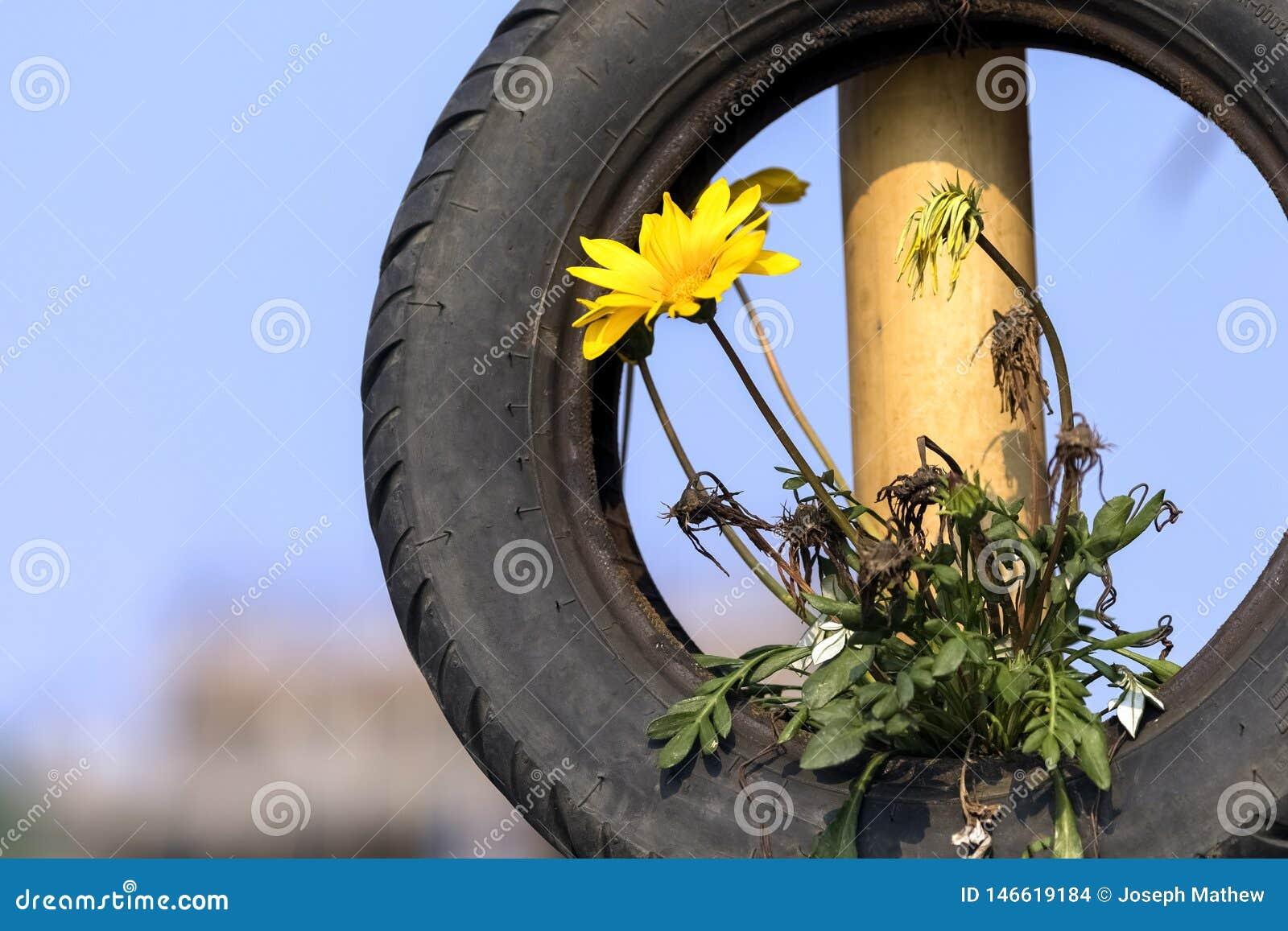 La planta de la flor que crece en el neumático