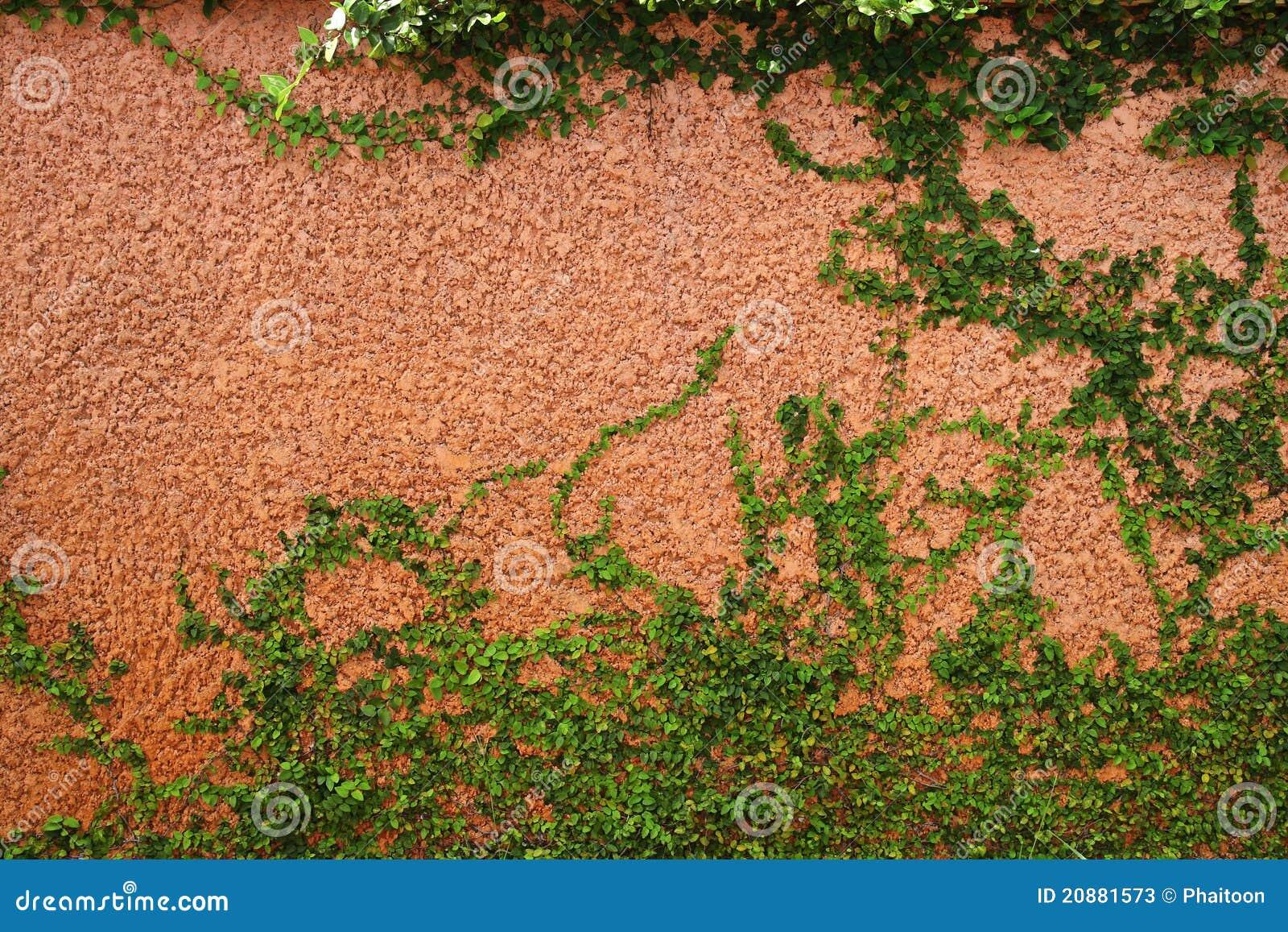 La planta verde de la enredadera imagen de archivo for Plantas en la pared