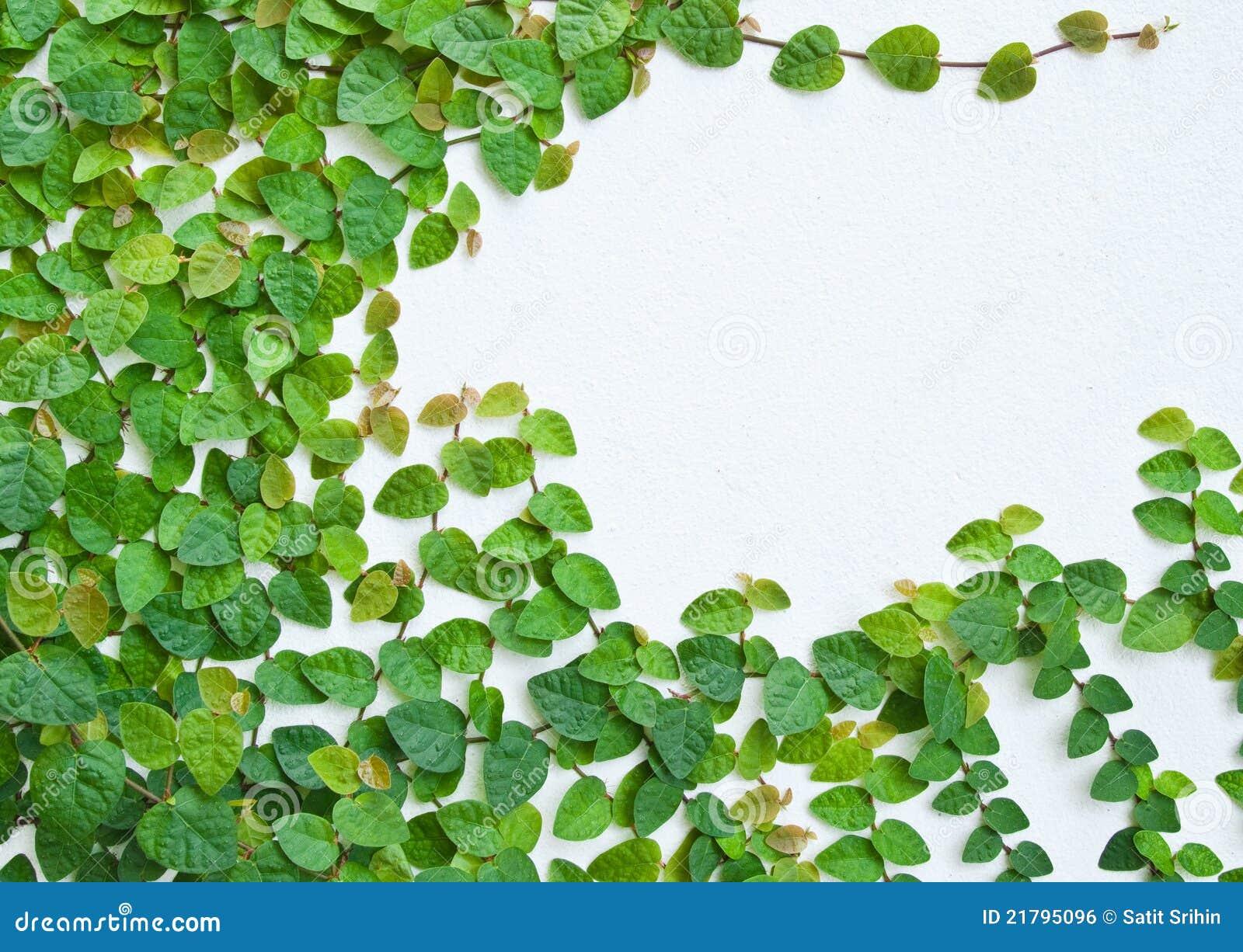 La planta verde de la enredadera en la pared foto de - Fotos en la pared ...