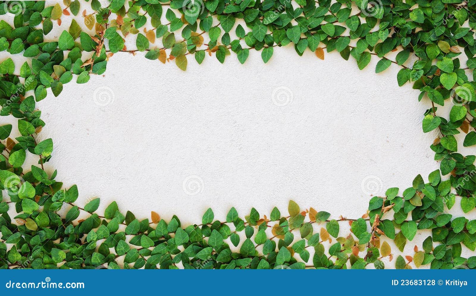 La planta verde de la enredadera en la pared fotos de - Fotos en la pared ...