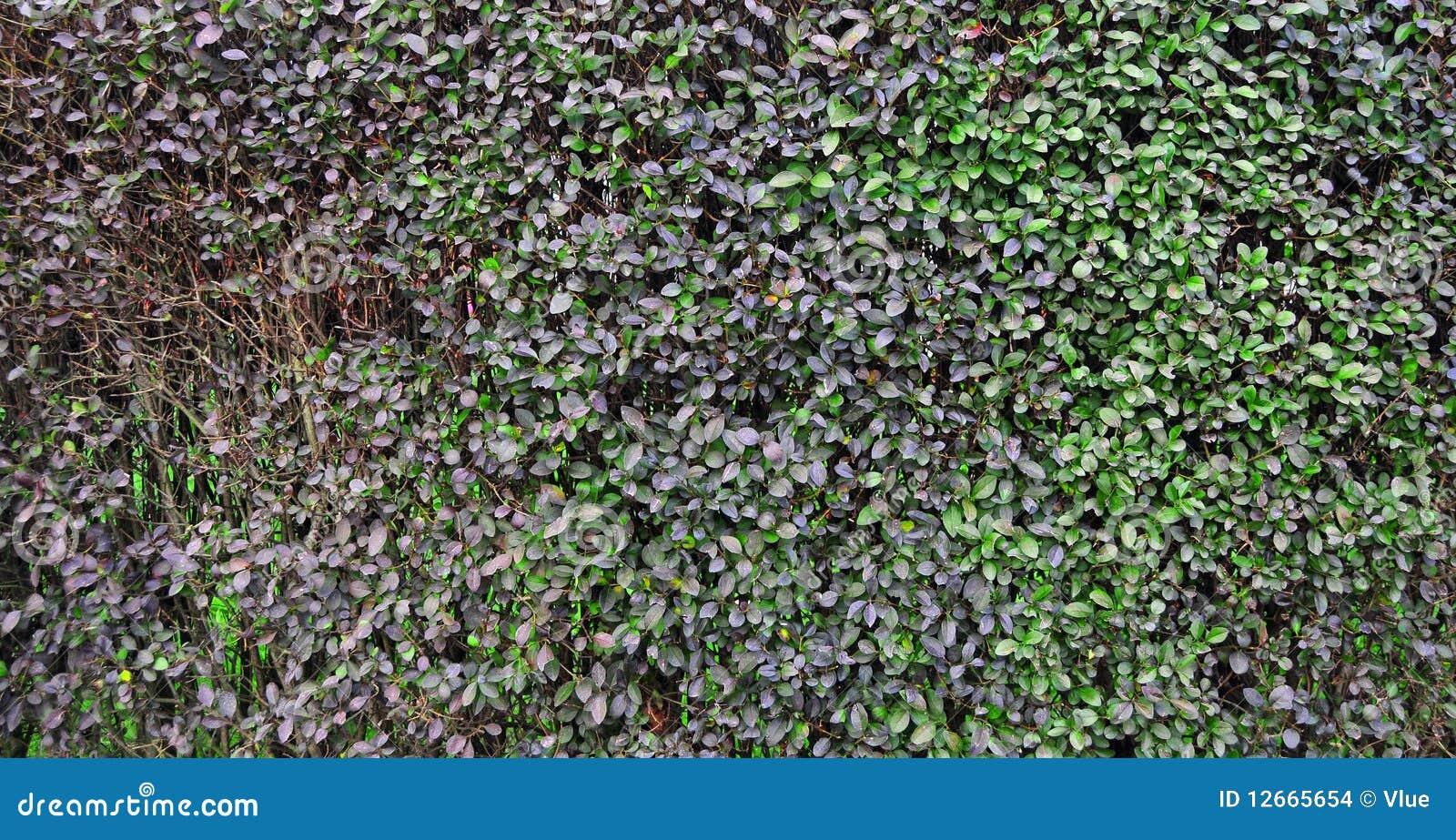 La plante verte pousse des feuilles texture photo stock for La plante verte