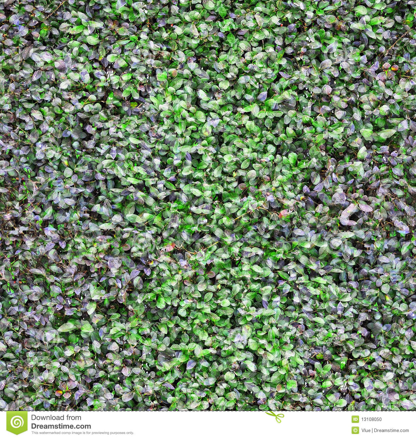 la plante verte pousse des feuilles texture photo stock image du environnement configuration. Black Bedroom Furniture Sets. Home Design Ideas