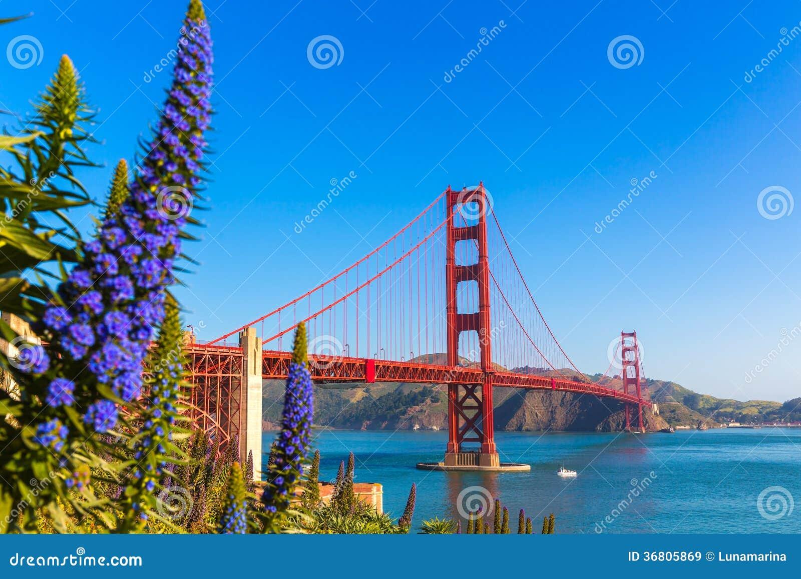 La porpora di golden gate bridge San Francisco fiorisce la California