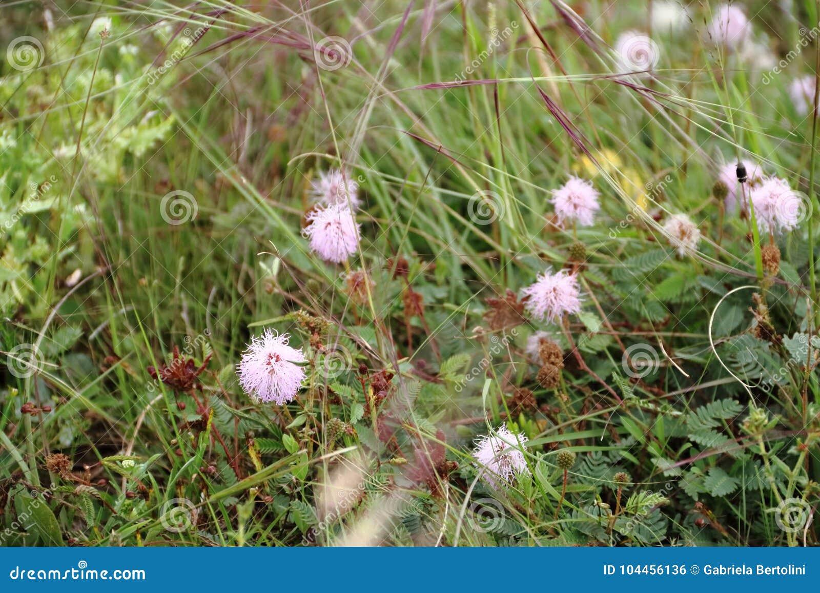 La pradera del campo floreció en primavera