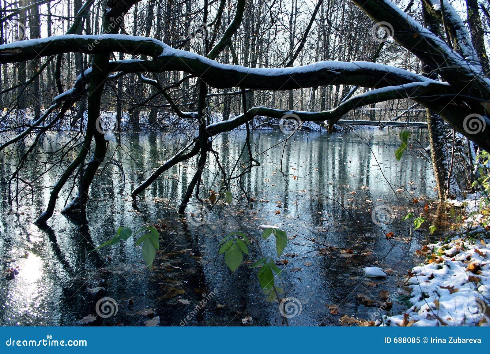 La première glace sur un étang.