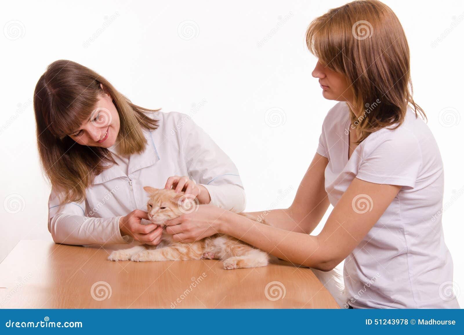 La presentadora trajo el gato a la cita del veterinario