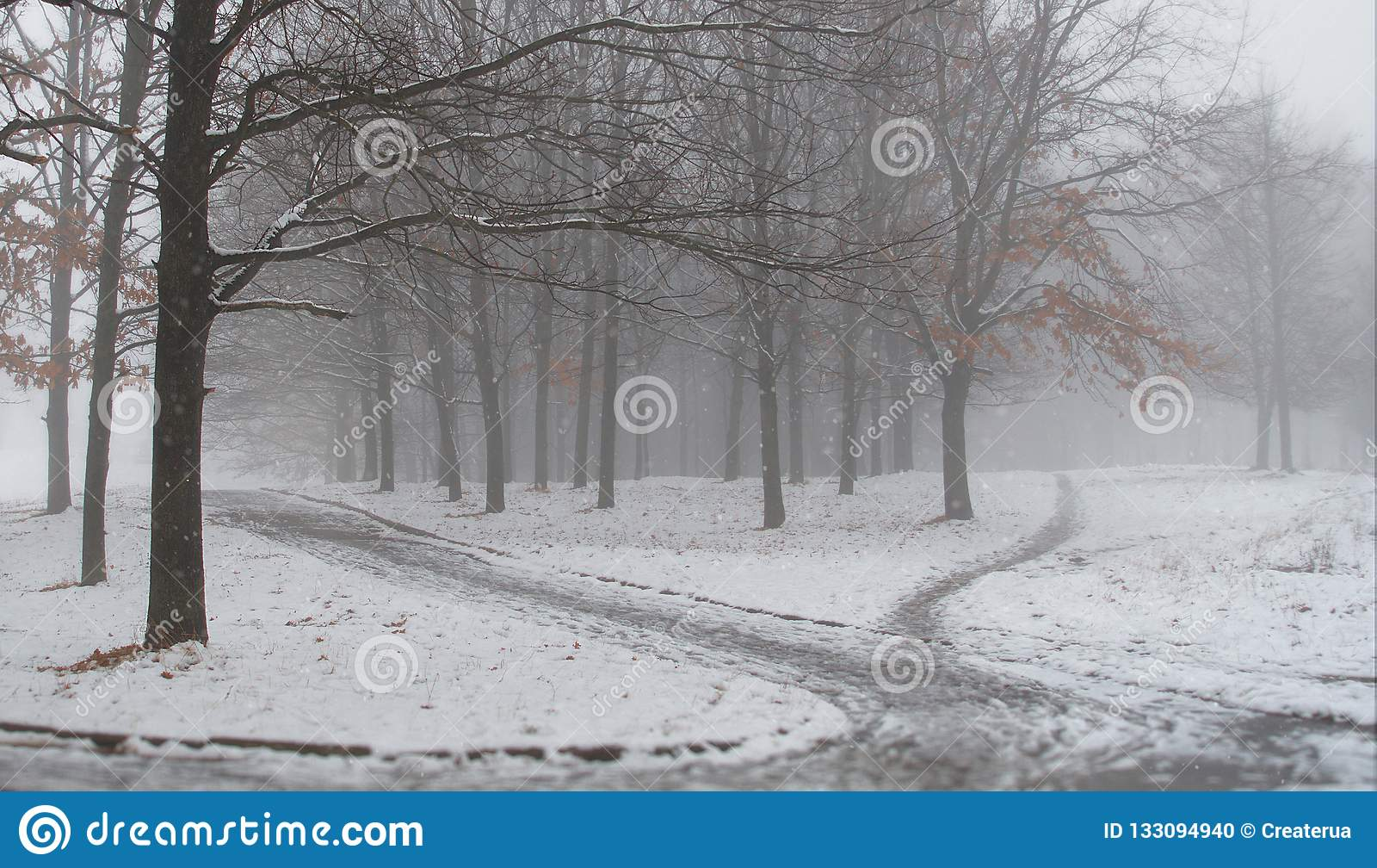 La prima neve nel parco della città Paesaggio di inverno Mattina nebbiosa