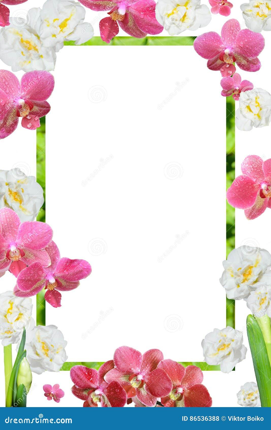 La Primavera Colorea El Marco De Orquídeas Y De Narcissuses Foto de ...