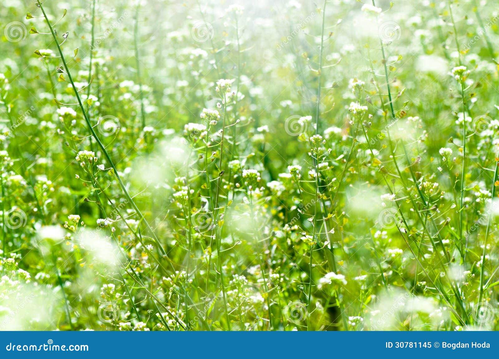 La primavera e l 39 estate wallpaper con erba verde ed i - Fiori da giardino primavera estate ...