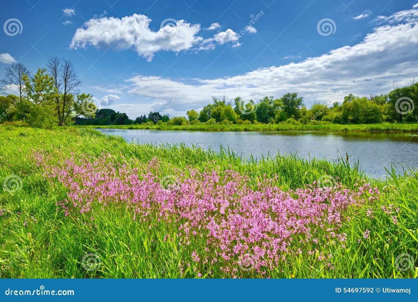 La primavera florece el campo de las nubes del cielo azul del paisaje del río
