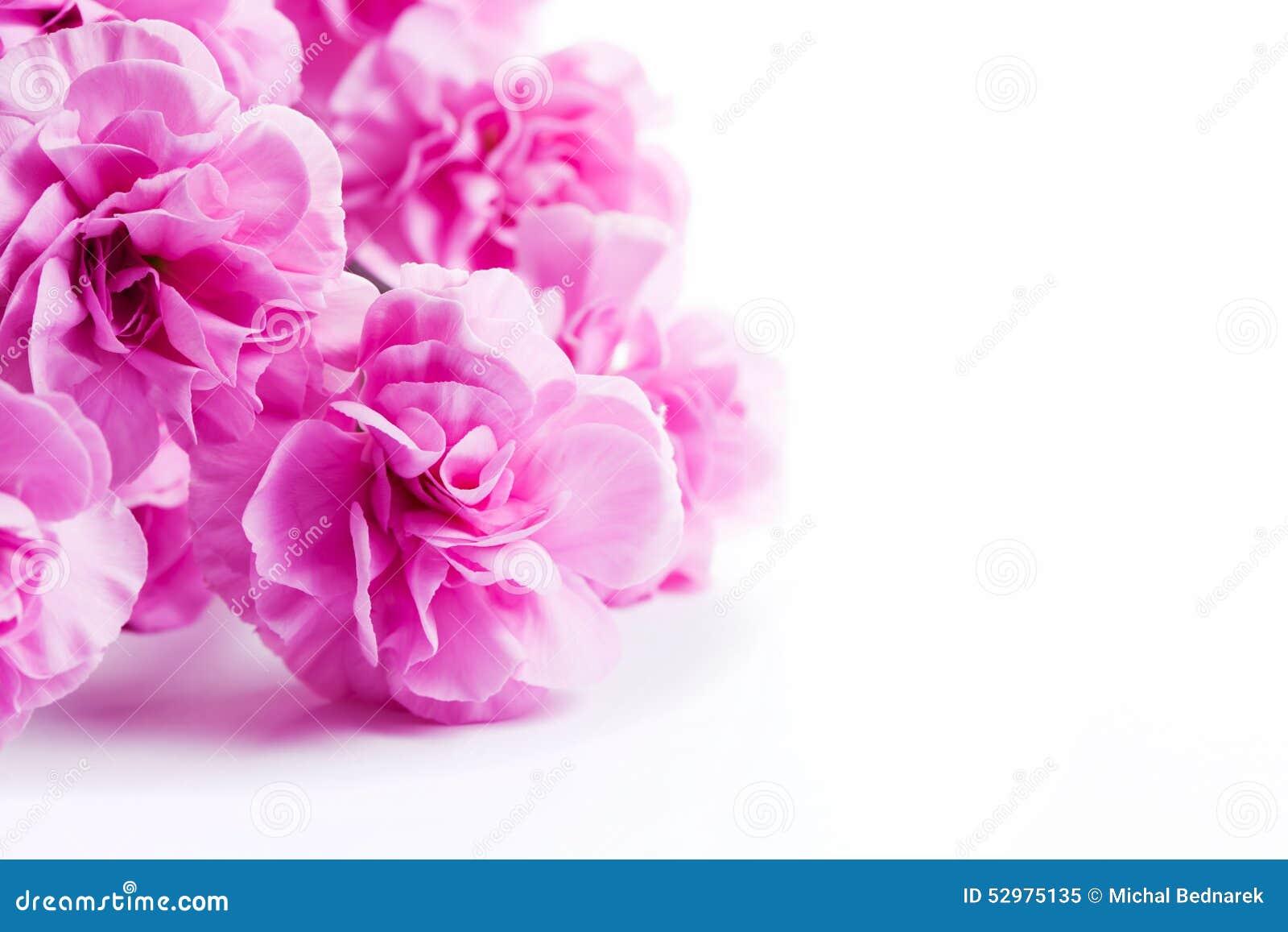 La primavera suave rosada florece el ramo en el fondo blanco