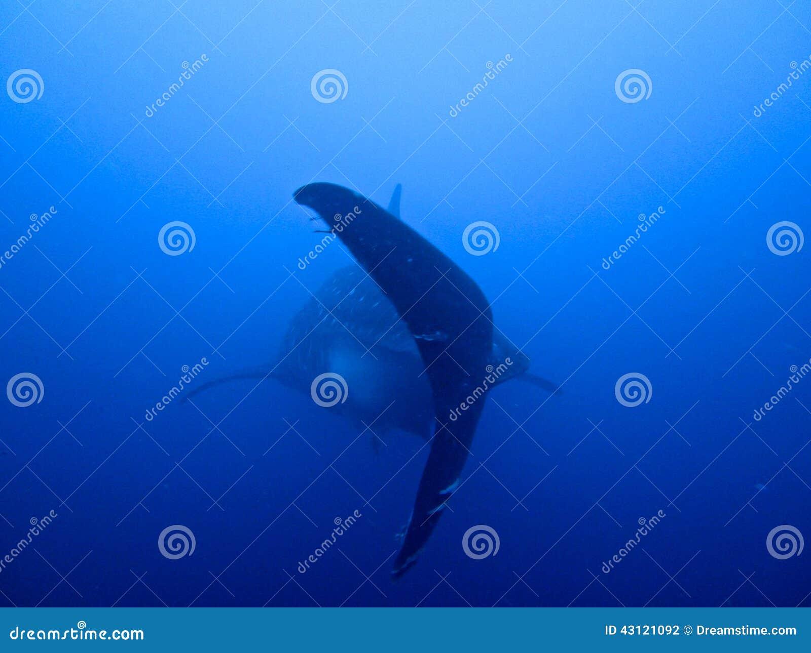 La queue des plus grands poissons du monde