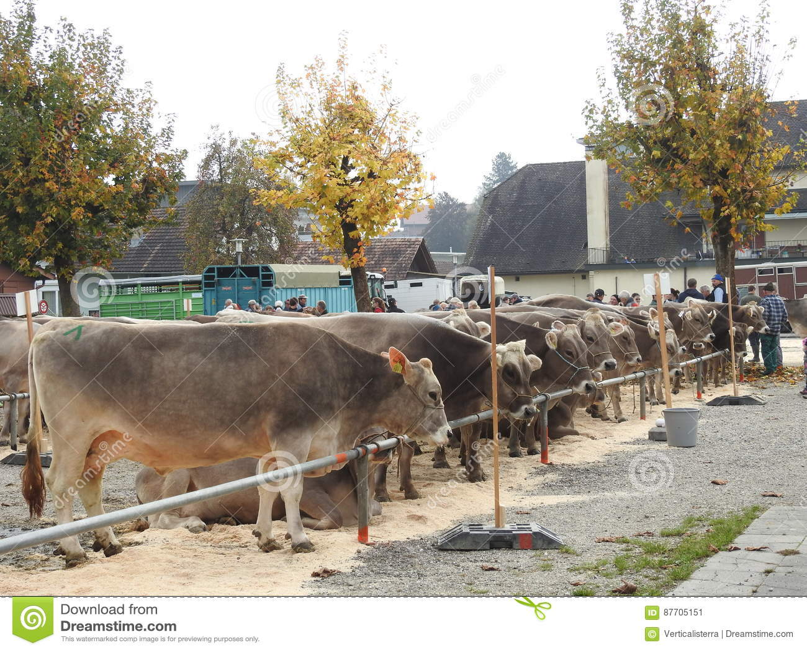 La réunion des vachers