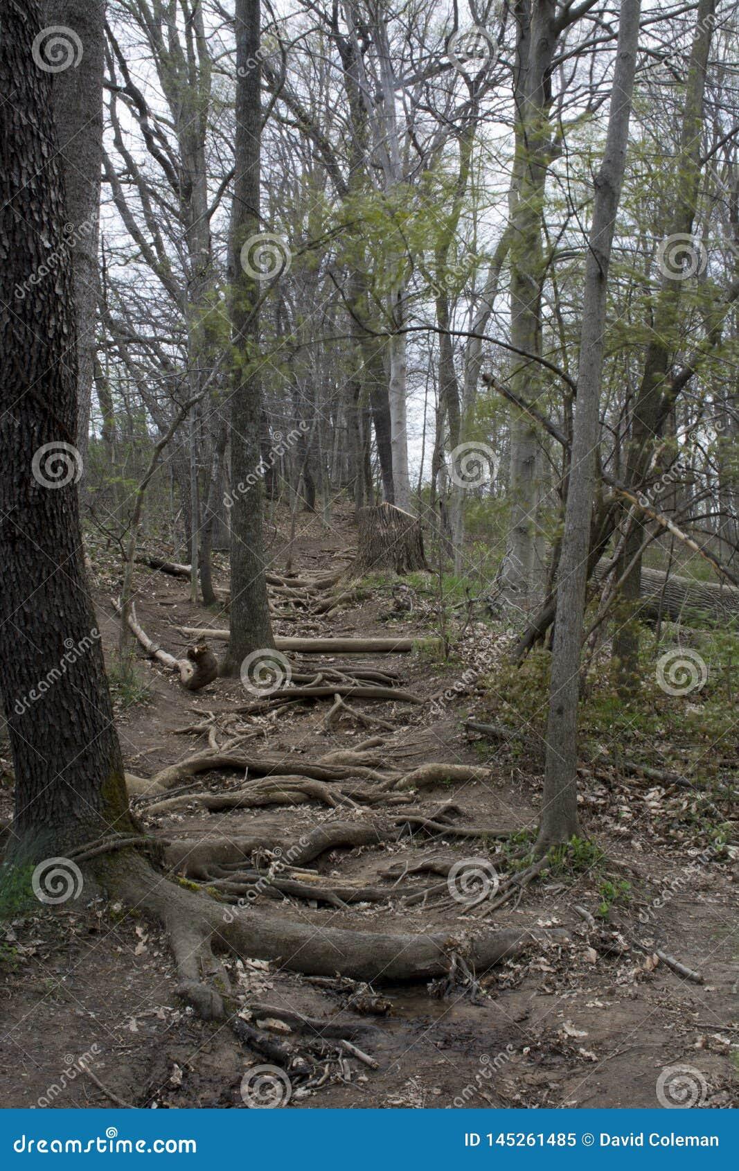 La raíz cubrió la pista de senderismo