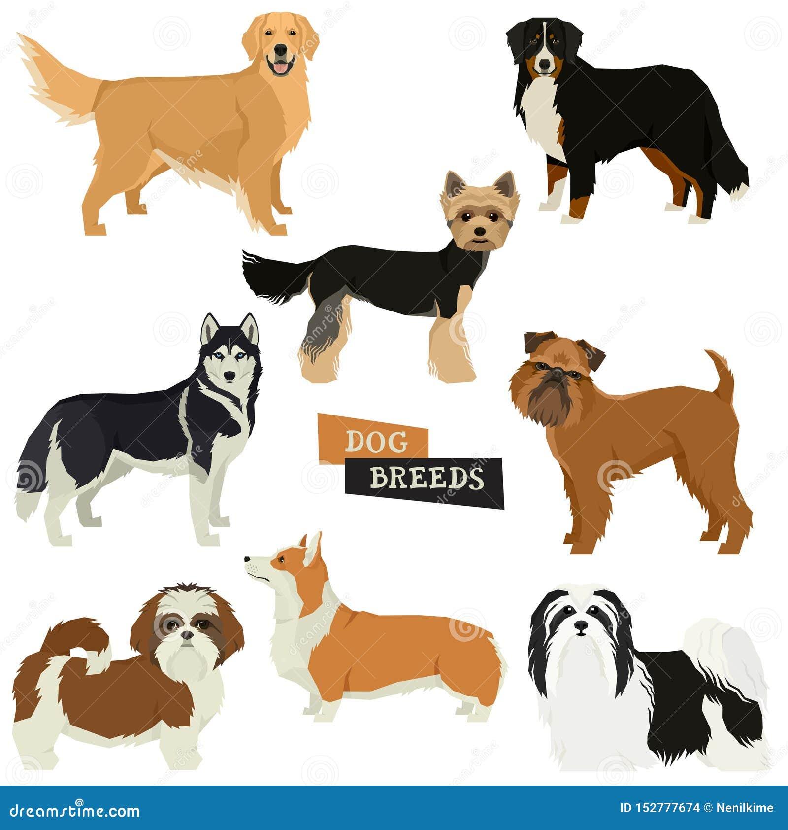 La raccolta del cane dell illustrazione di vettore ha isolato gli oggetti