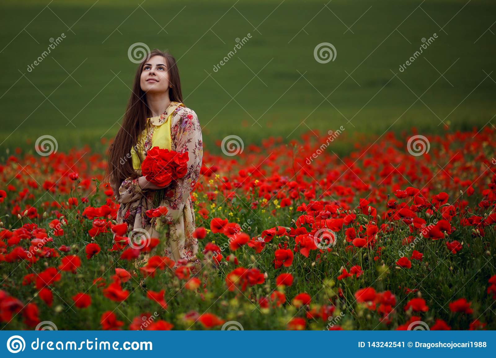 La ragazza dai capelli lunghi sensuale, messa in papaveri rossi sistema, su un bello fondo del paesaggio dell estate