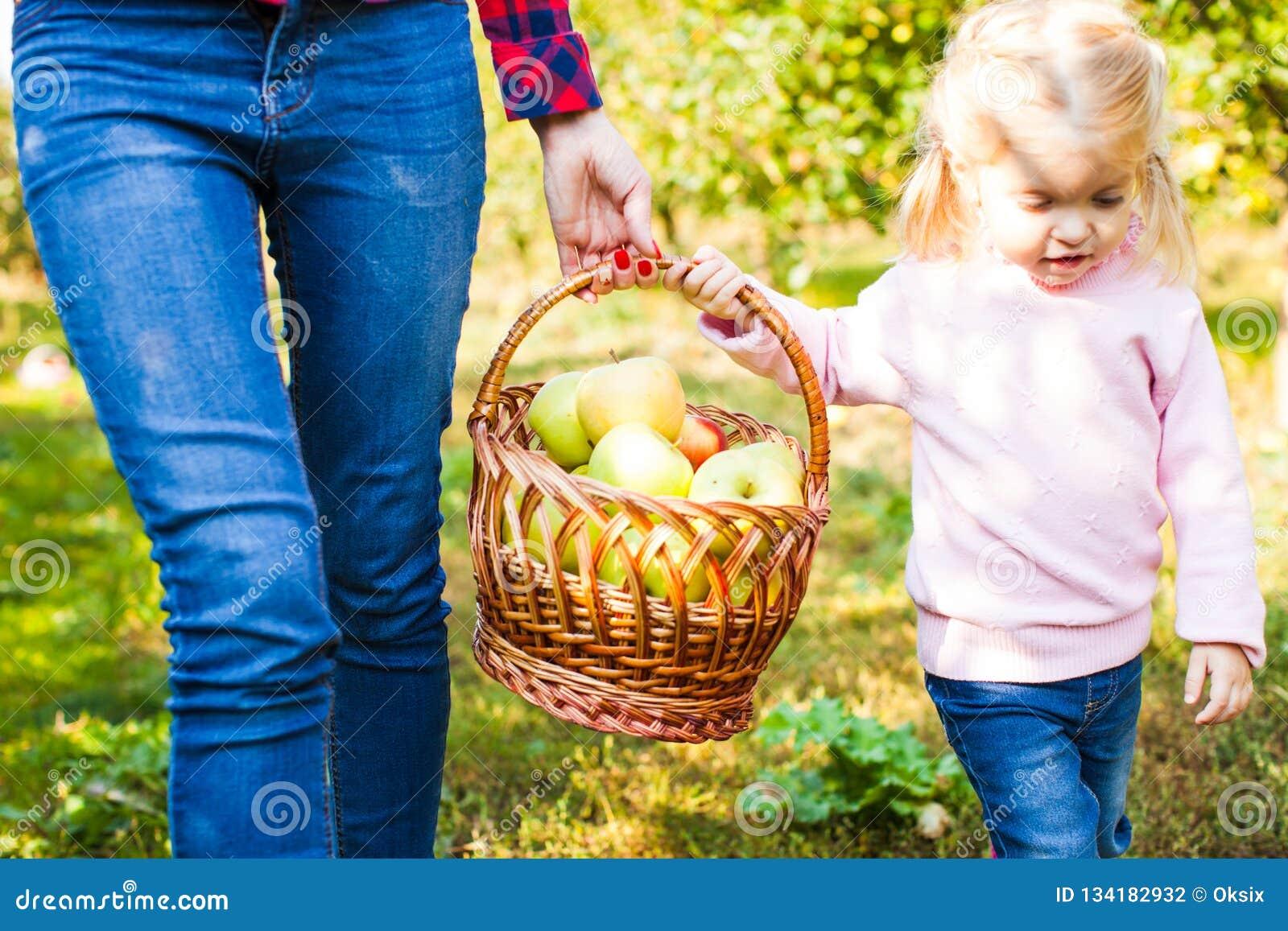 La ragazza sorridente felice con la madre sta riunendo le mele