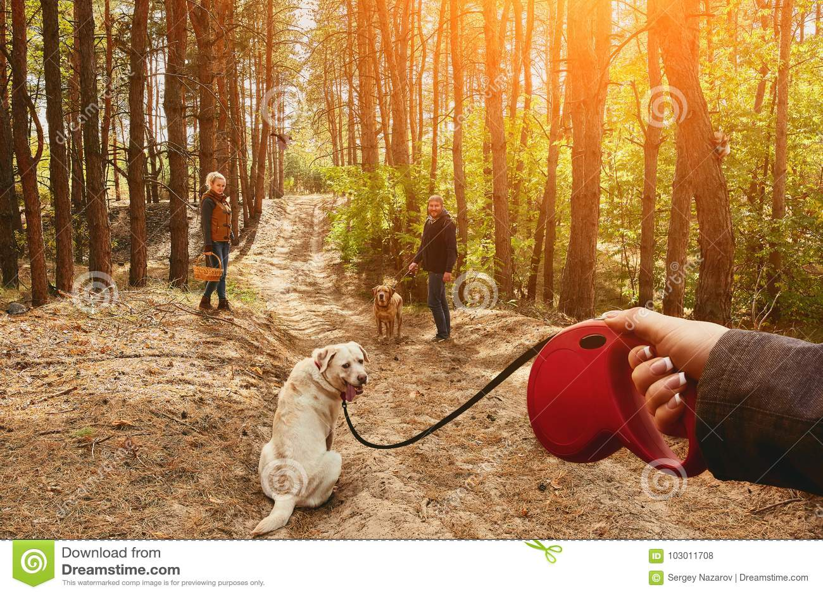 La ragazza su un guinzaglio conduce un cane di Labrador, che gira intorno e esamina la macchina fotografica