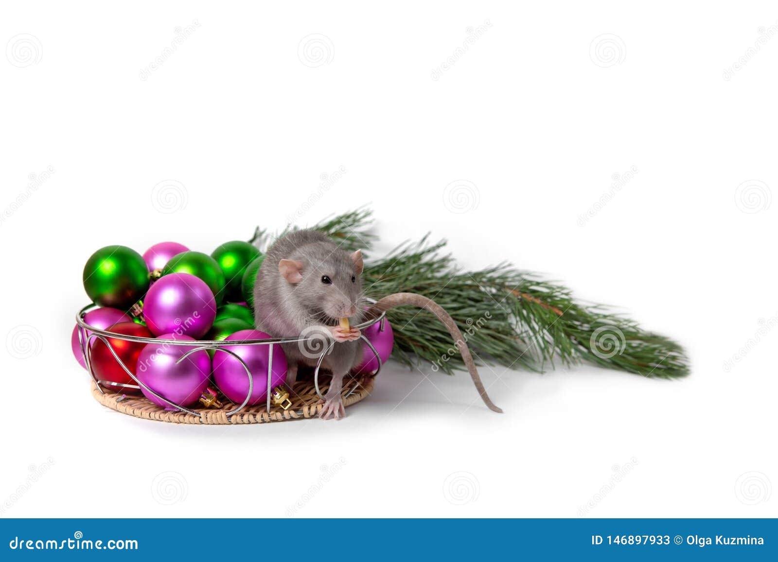 La rata encantadora Dumbo se sienta al lado de decoraciones de la Navidad y de una rama del pino Invitaci?n del A?o Nuevo S?mbolo