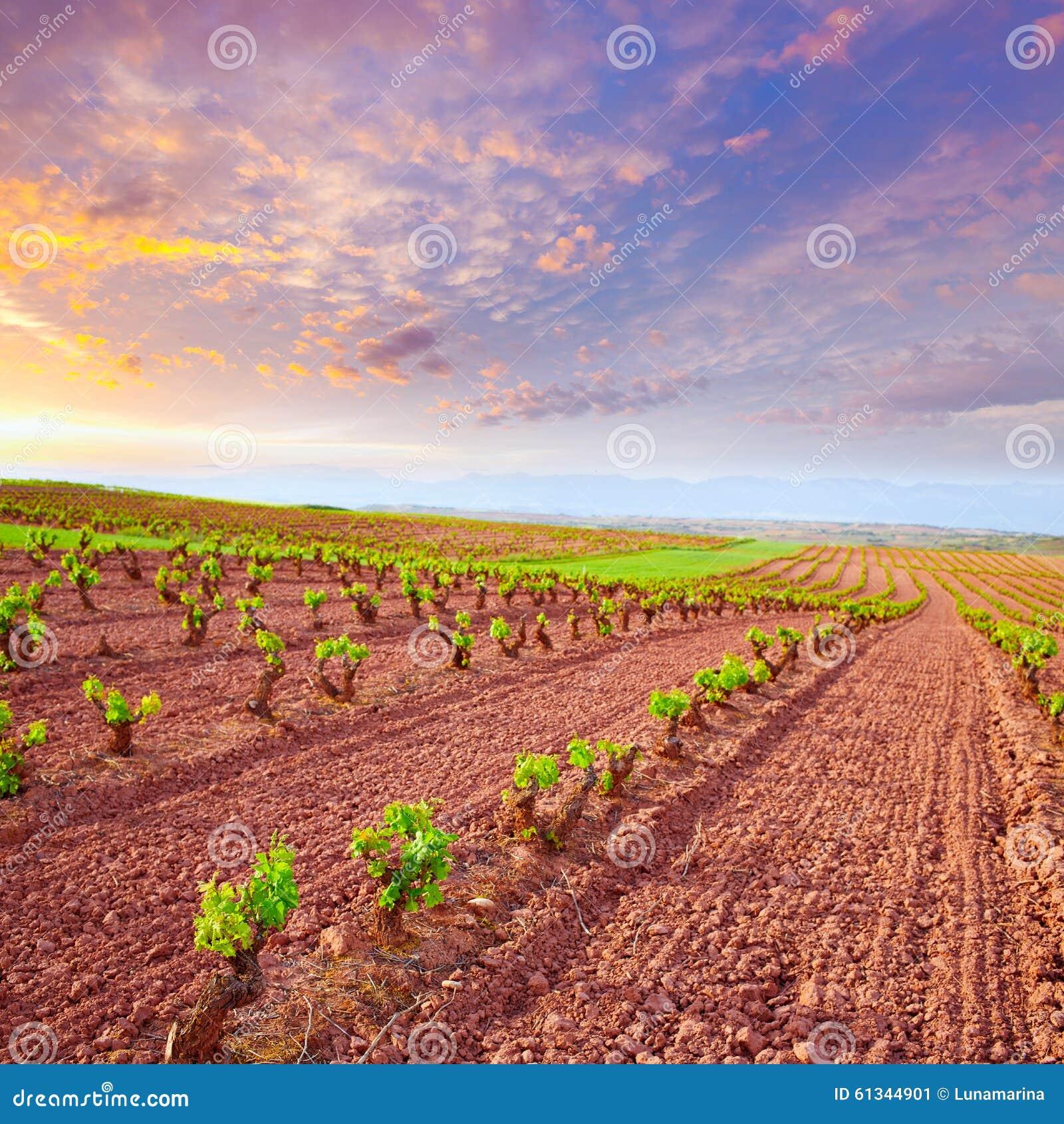La Rioja vingårdfält i vägen av St James