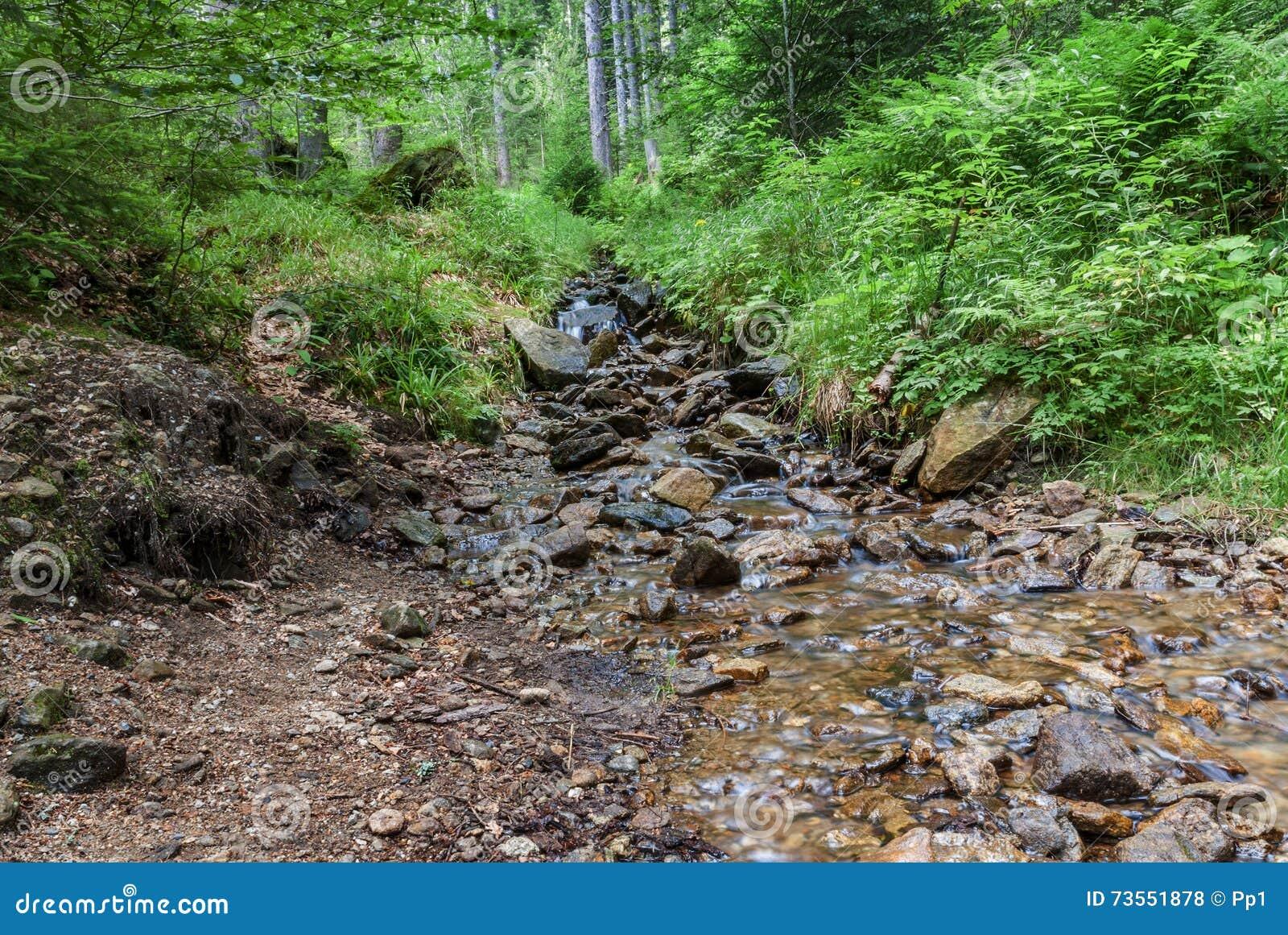 La roca del arroyo del bosque empiedra árboles