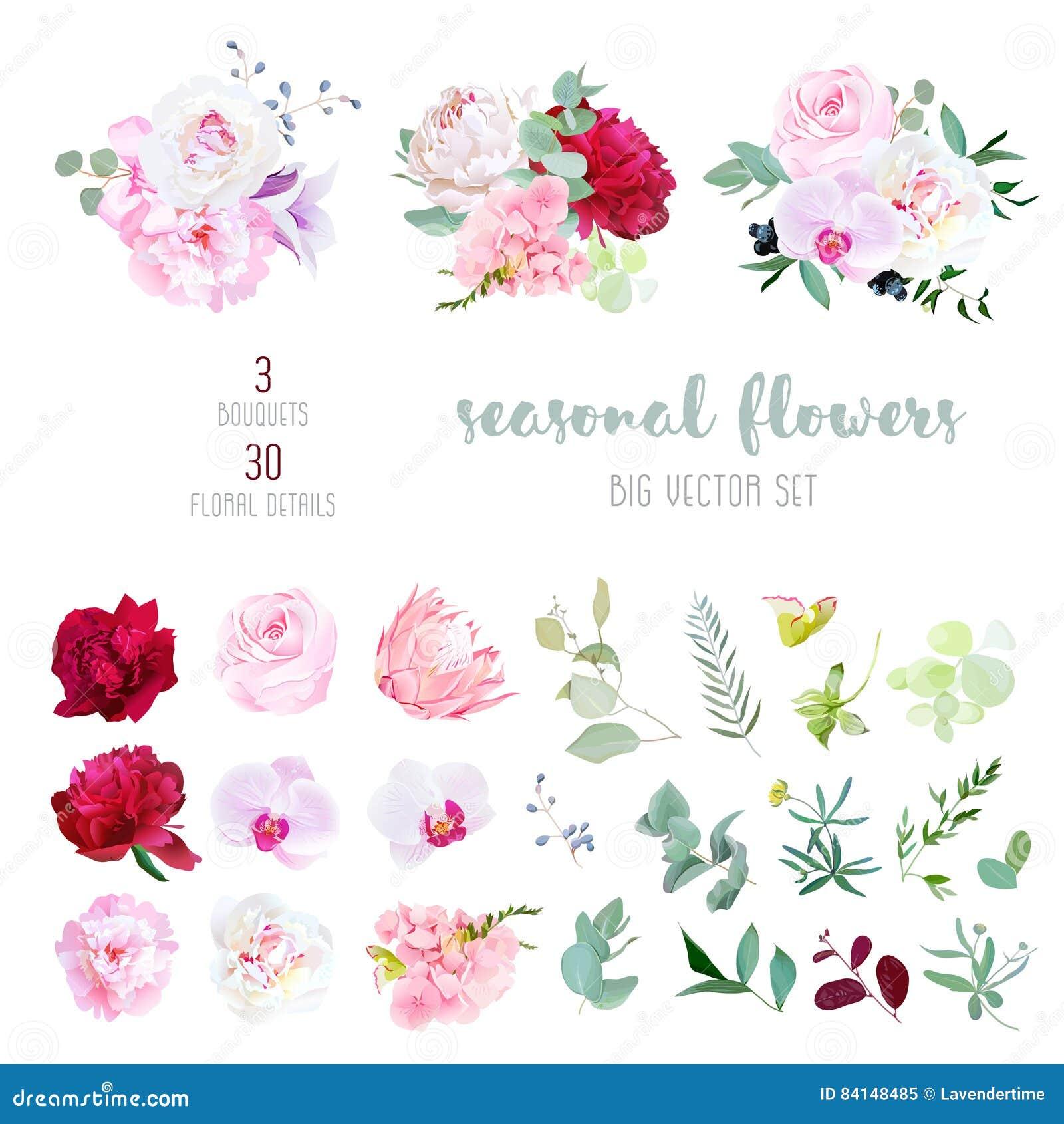 La rosa del rosa, el blanco y la peonía roja de Borgoña, protea, orquídea violeta, hortensia, campánula florece