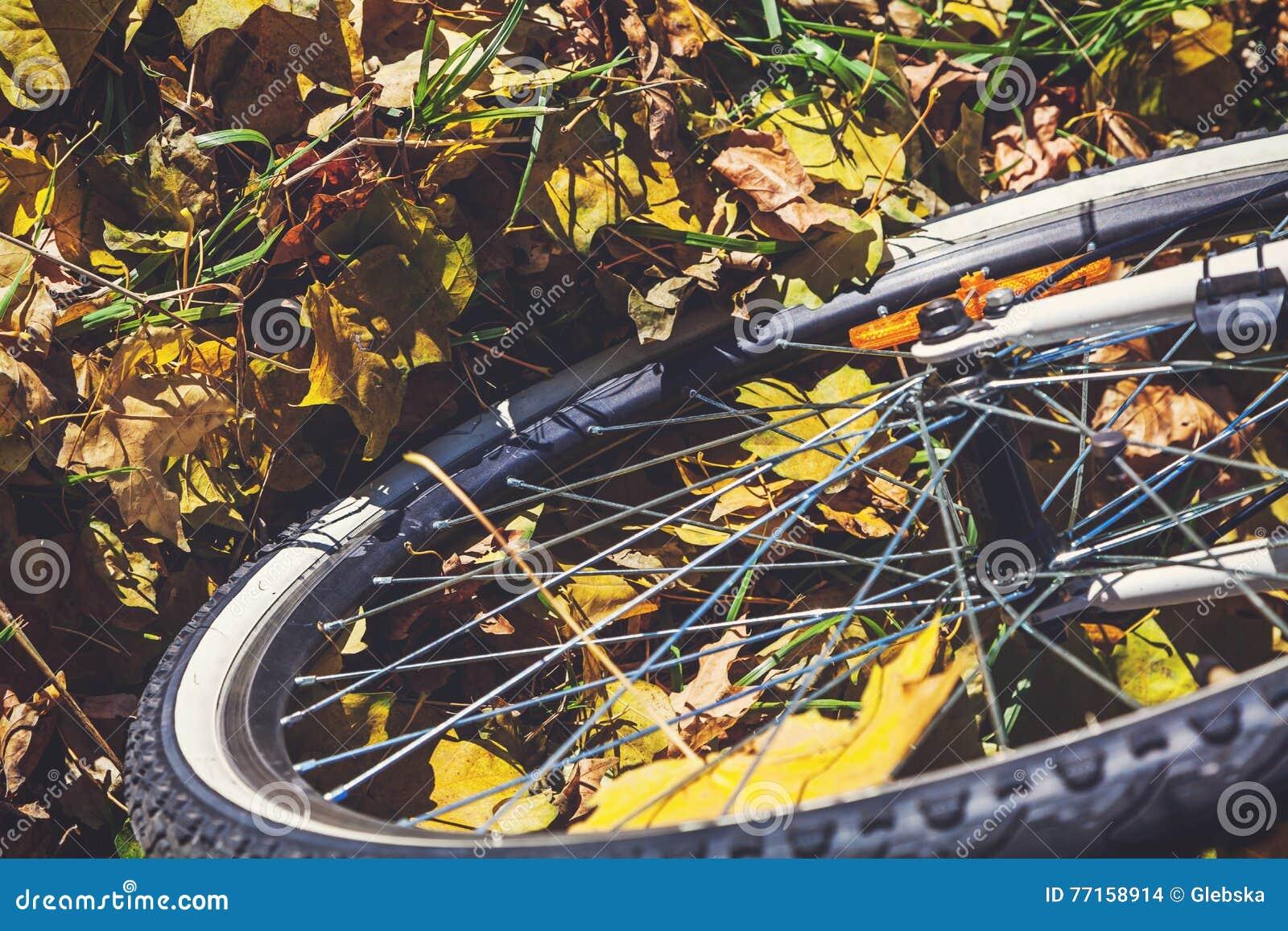 La roue de bicyclette se tient sur les feuilles tombées des arbres