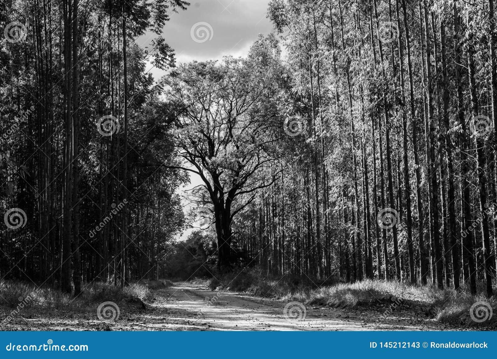 La route à l arbre