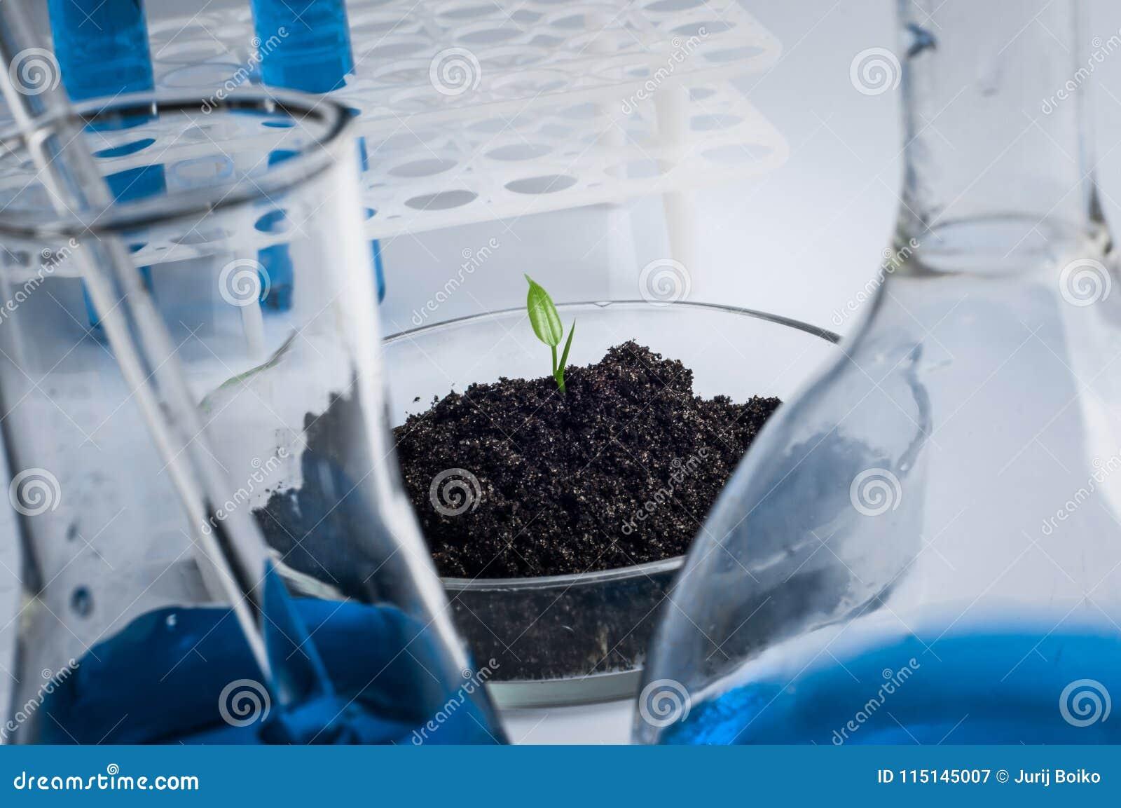 La Science, biologie, écologie, recherche et concept de personnes - fermez-vous des mains de scientifique tenant la boîte de Pétr