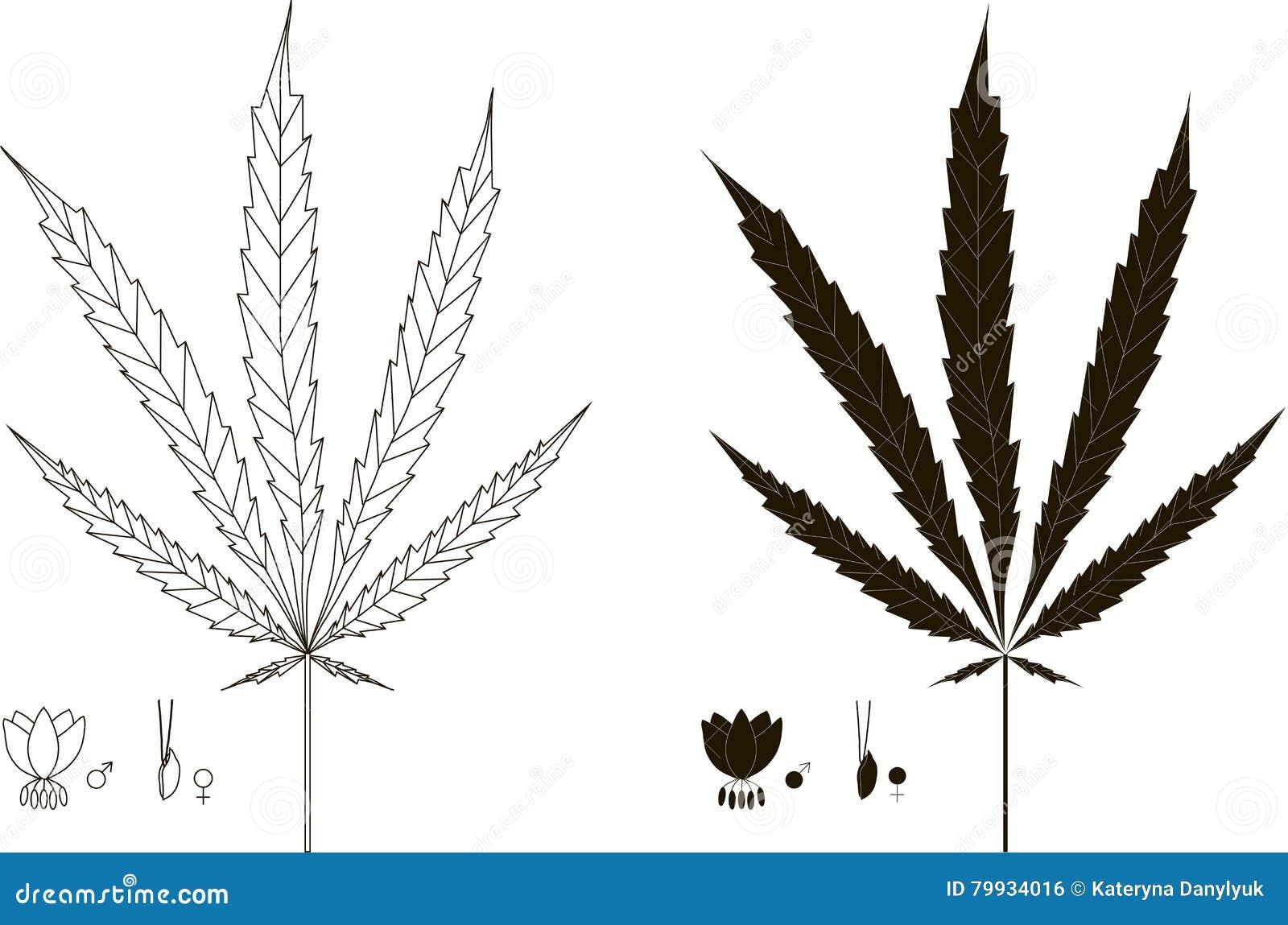 La Silhouette Graphique Noire Et Blanche Contour De Cannabis