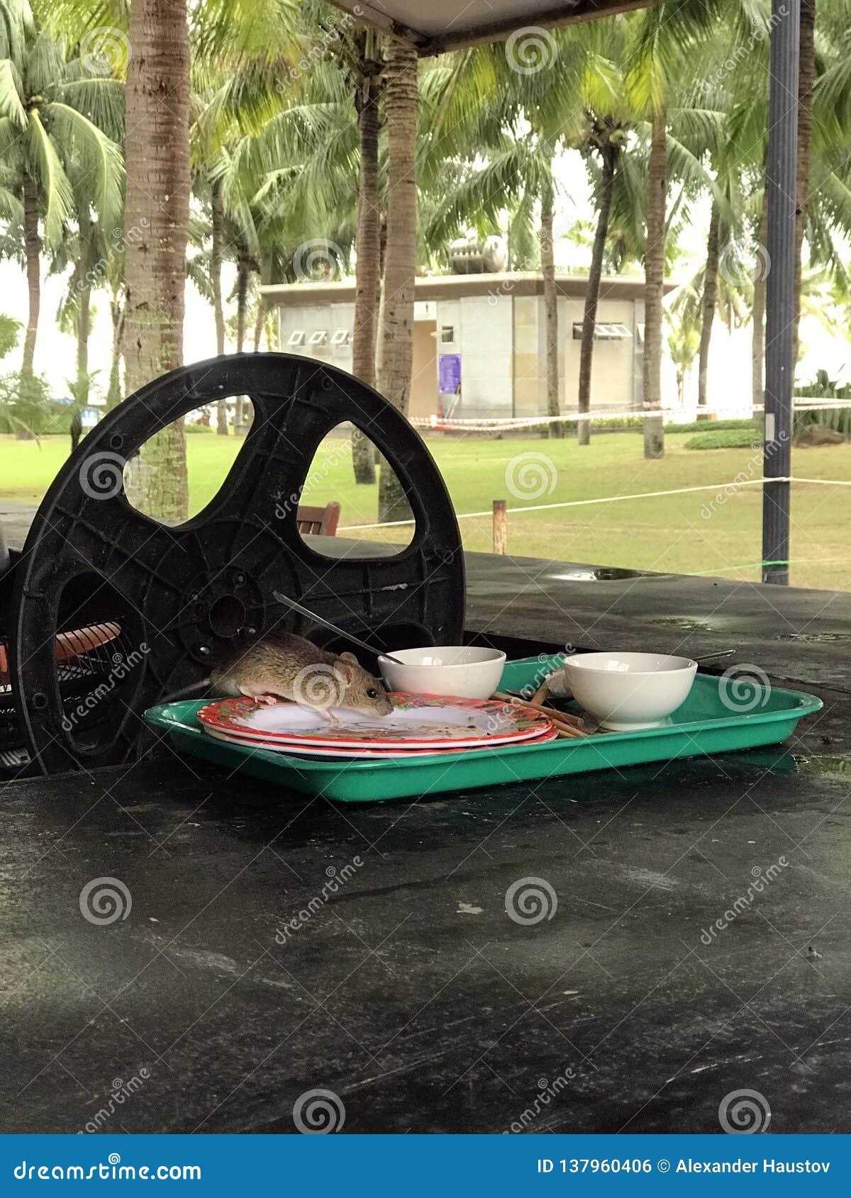 La souris dans le plat mange de la nourriture cambodia