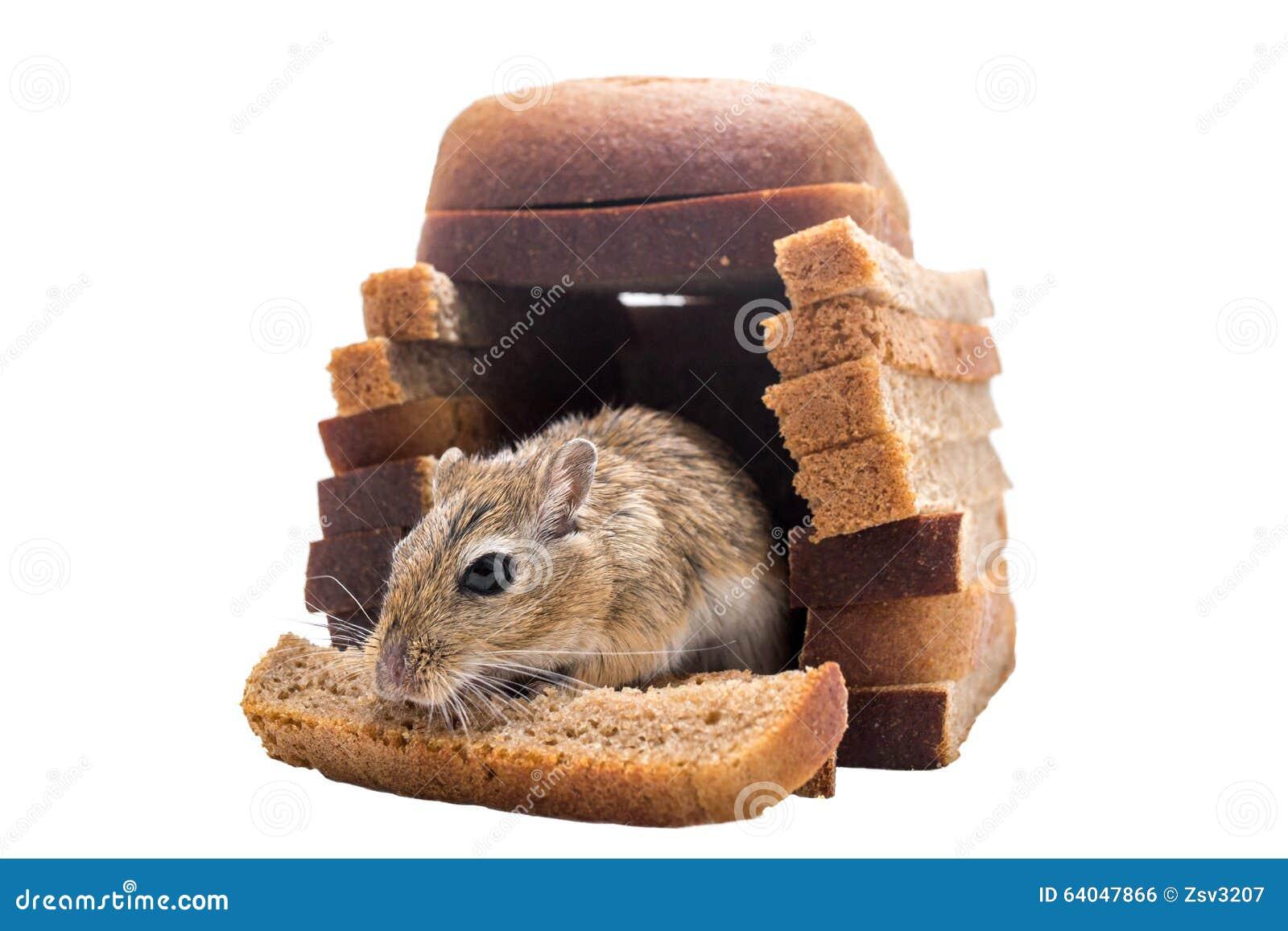 la souris mange du pain dans leur maison de pain photo stock image du amorce nourriture 64047866. Black Bedroom Furniture Sets. Home Design Ideas