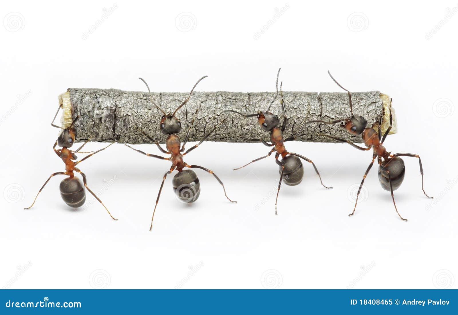 La squadra di formiche funziona con il libro macchina, lavoro di squadra