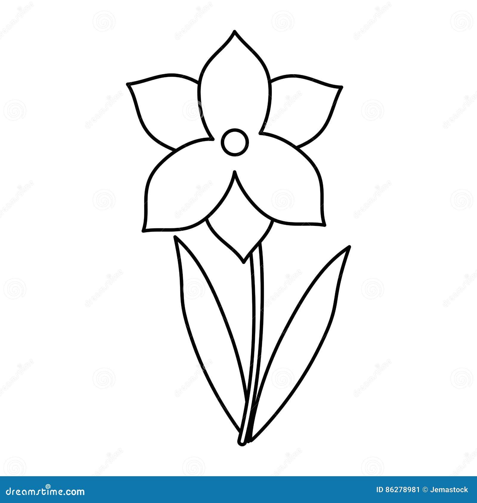 La stagione primaverile del fiore del narciso assottiglia la linea