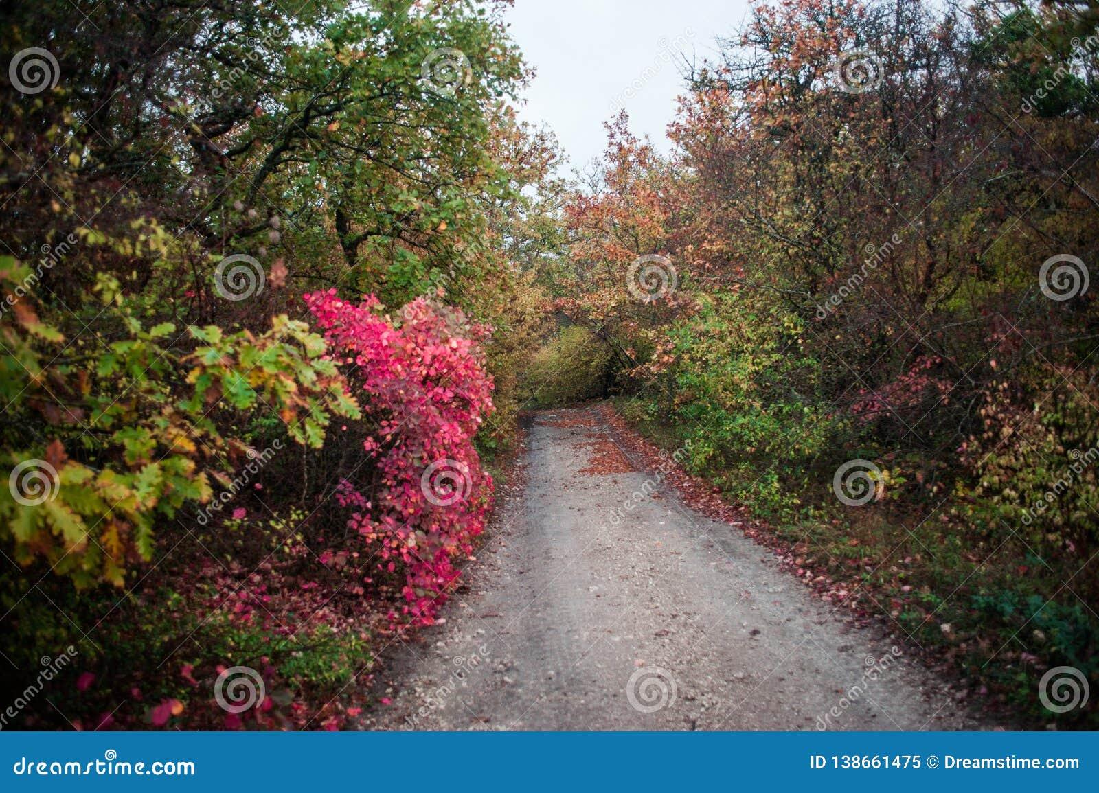 La strada alla foresta la strada al giardino