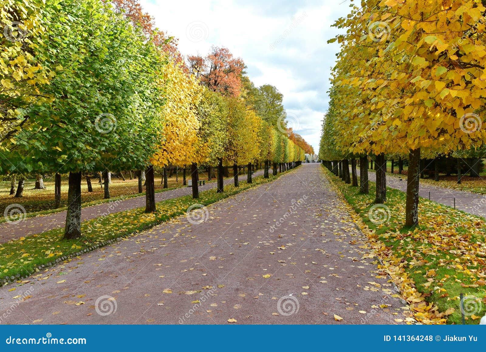 La strada con il fogliame di caduta e gli alberi gialli