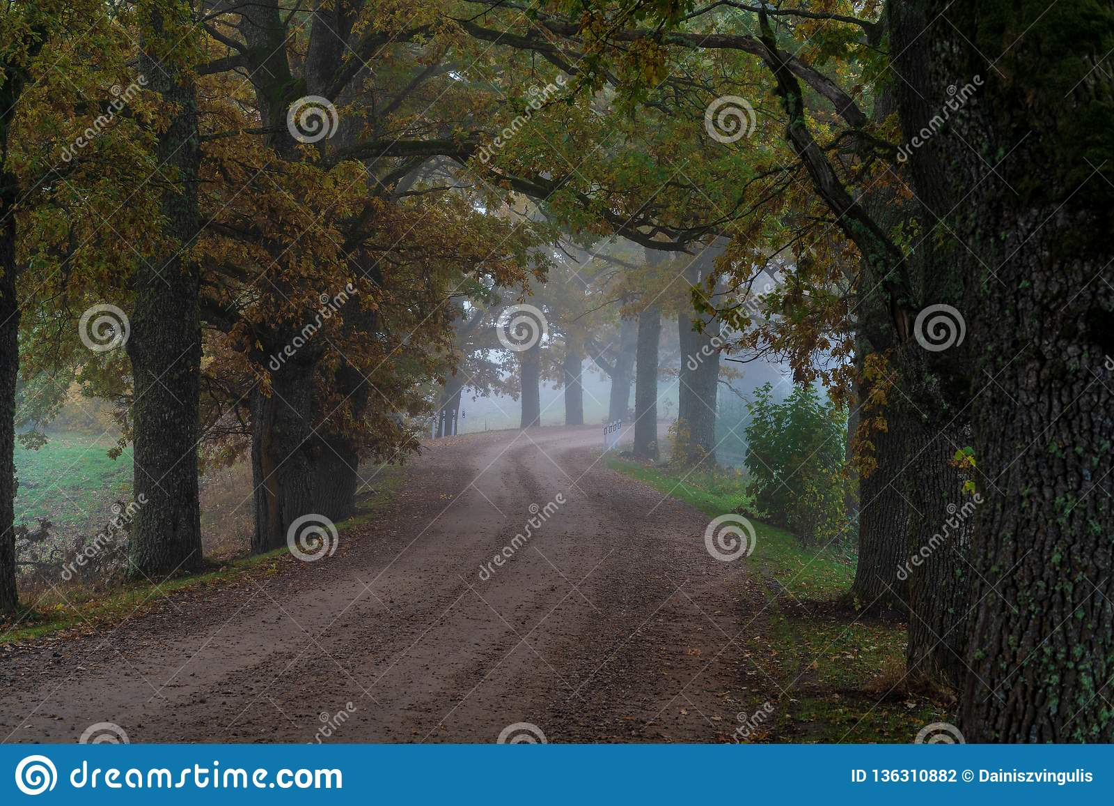 La strada rurale passa tramite vicoli i grandi di un albero