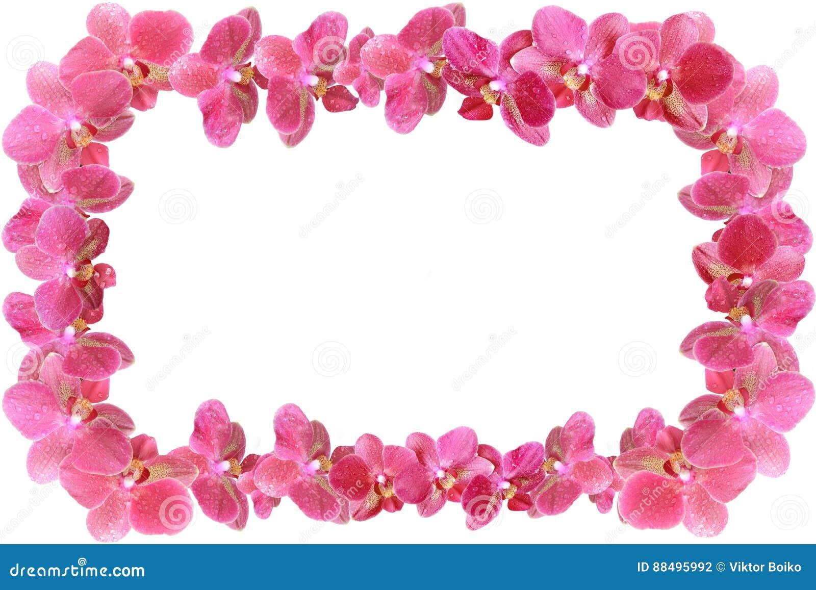 La struttura della foto fatta dell orchidea fiorisce con le gocce di rugiada isolata da fondo