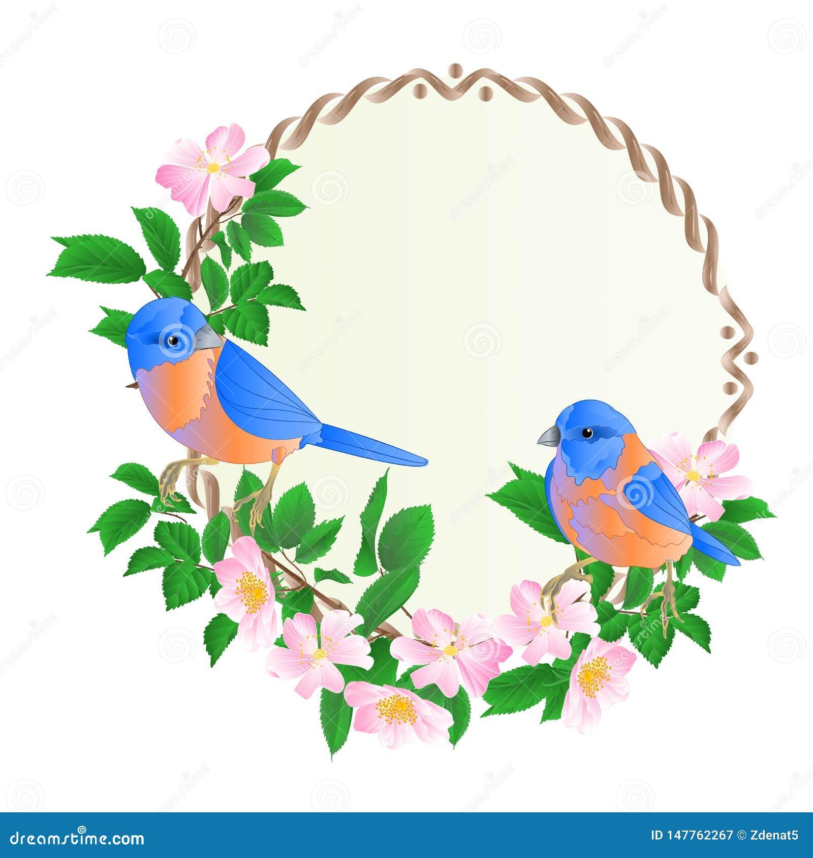 La struttura rotonda floreale con l illustrazione festiva d annata di vettore del fondo uccellini azzurri svegli degli uccelli di