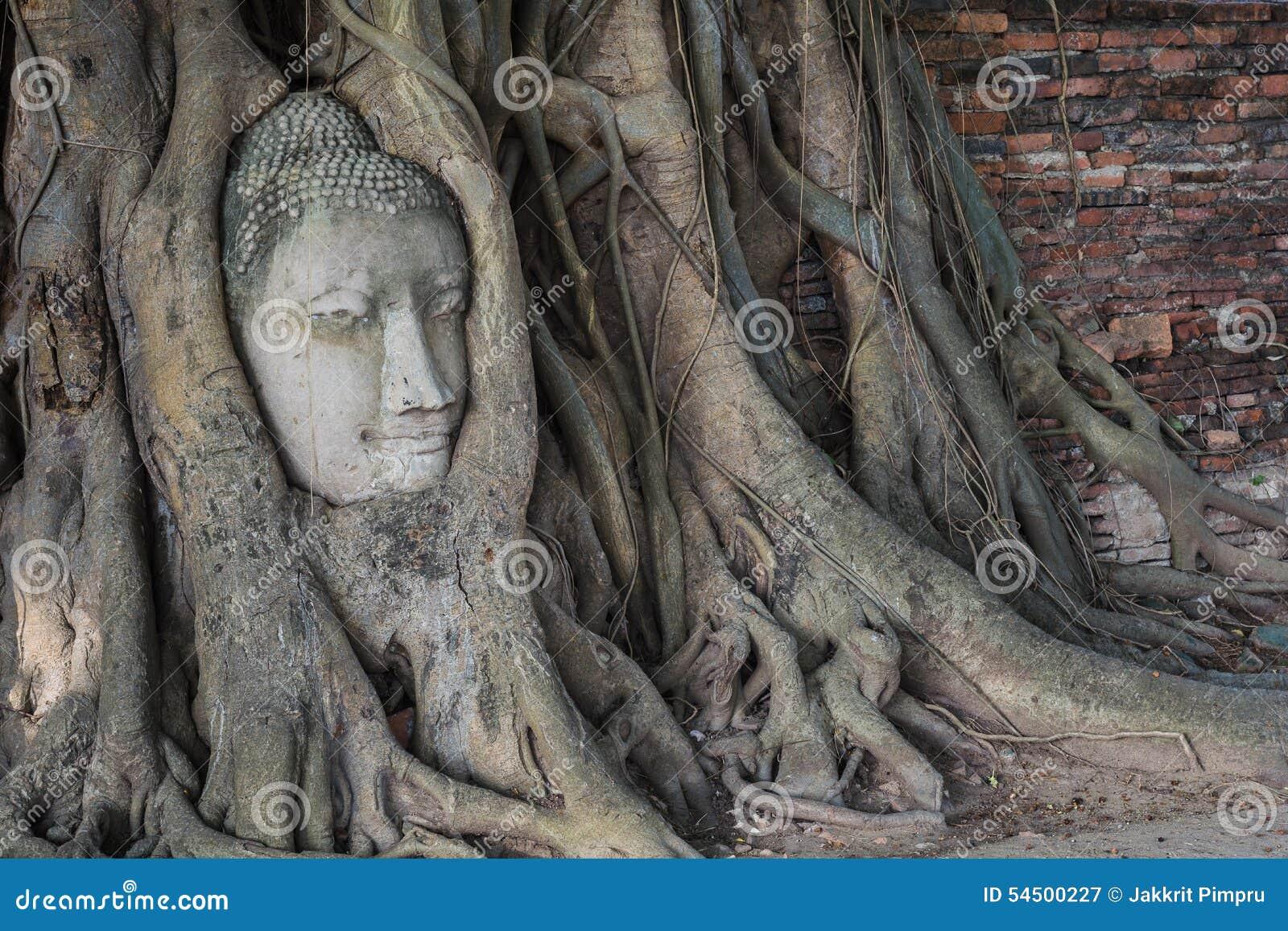 La tête de la statue de Bouddha dans l arbre de Pho s enracine au temp de Wat Mahathat