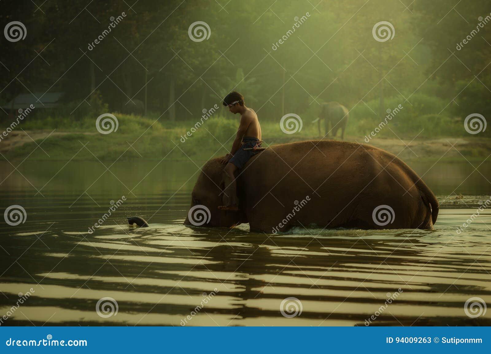 La Tailandia al parco dell elefante del mahout del villaggio di Chang da bagnare in un pon