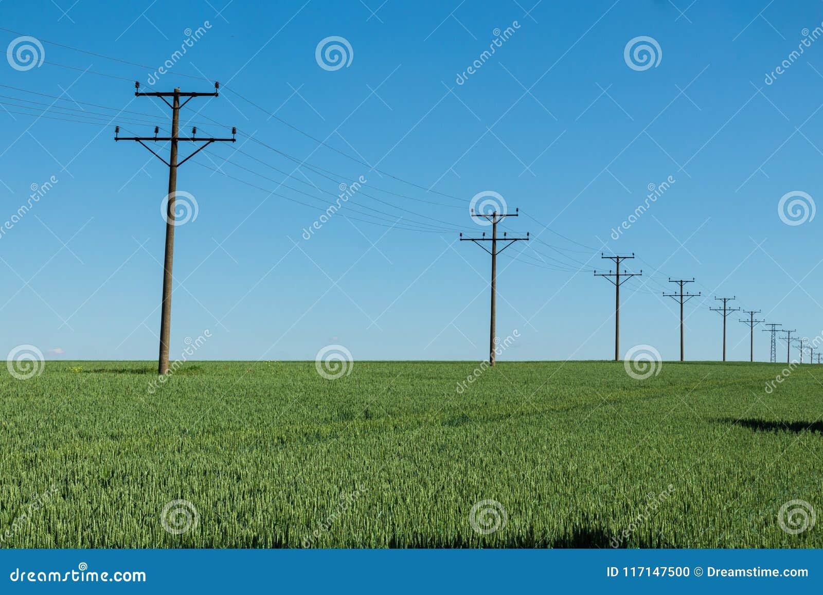 La terre de jour verte d agriculture de champ de blé avec des traces et le transfert électrique câble des piliers