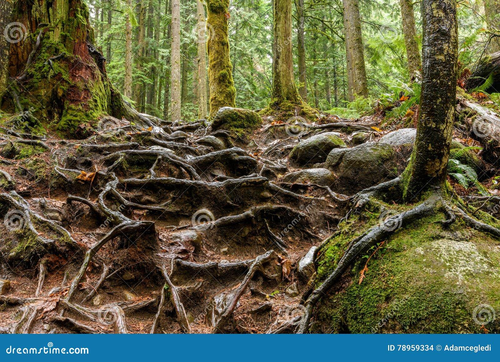 La textura abstracta del árbol arraiga en la selva tropical de Lynn Can