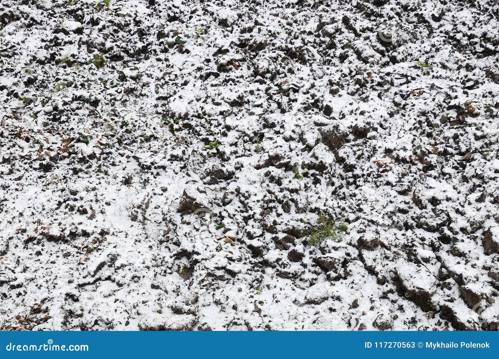 La textura de la tierra, cubierta con una capa delgada de la nieve El suelo del jardín en invierno El cierre cavado de la tierra