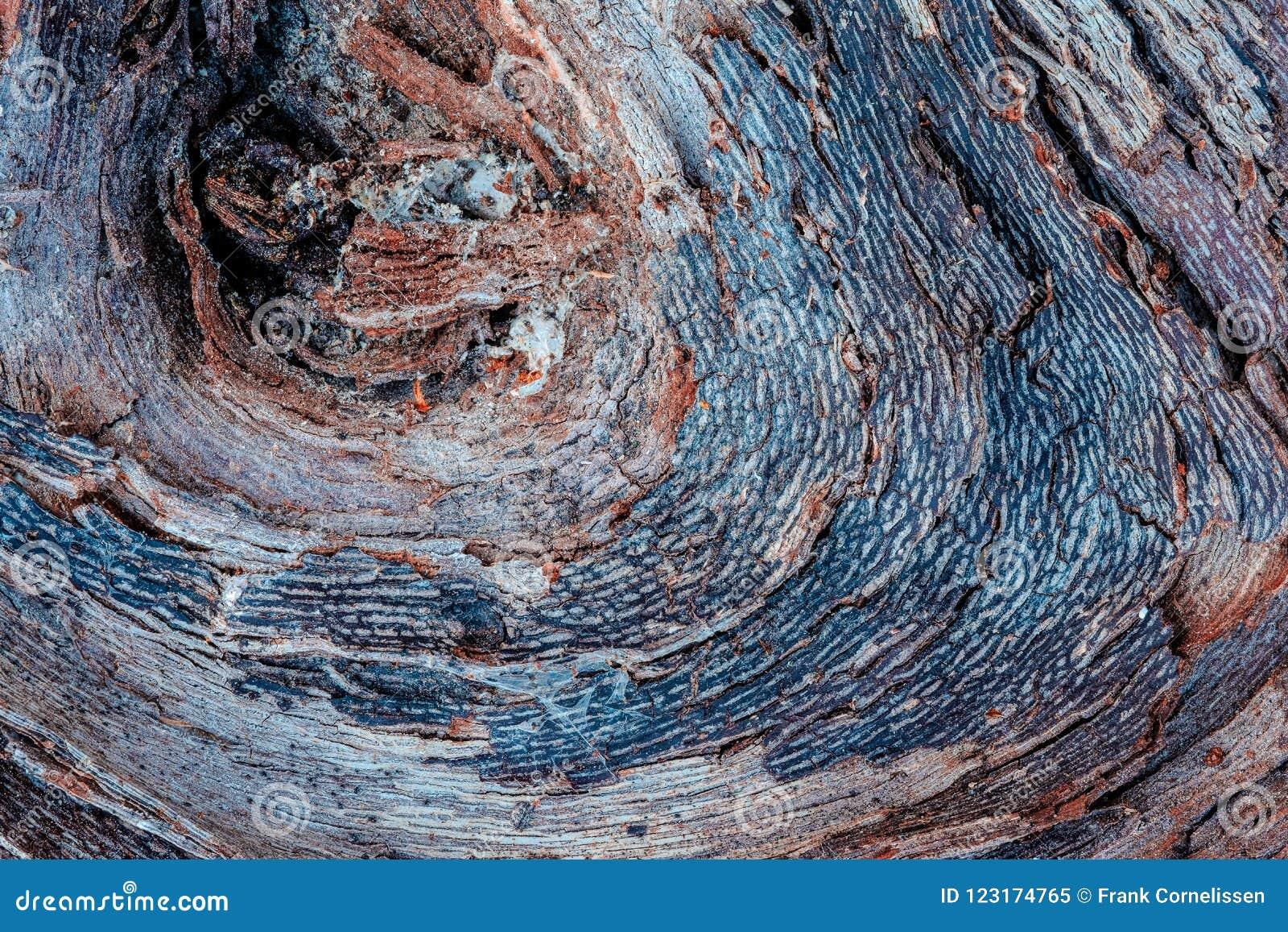 La textura rica de la madera resistida, con las grietas y los colores de tierra