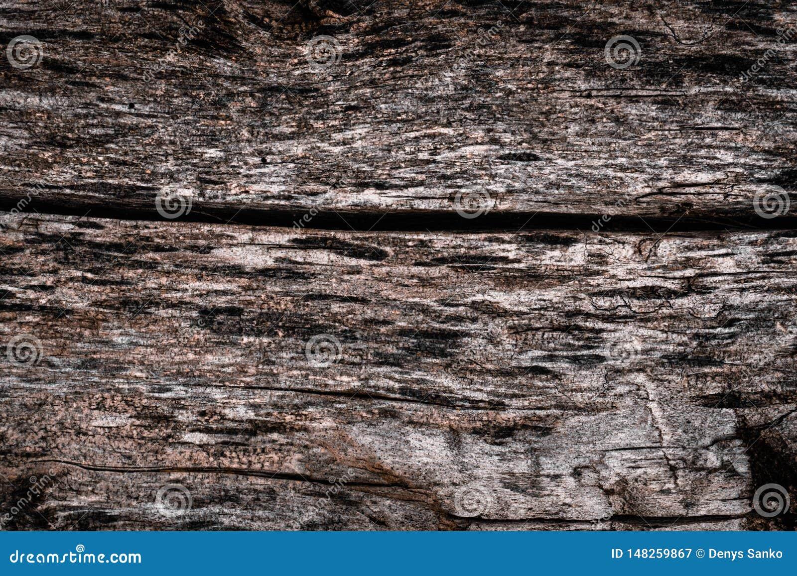 La texture du vieil arbre putr?fi? avec des fissures et des irr?gularit?s d ?corce Papiers peints de volume