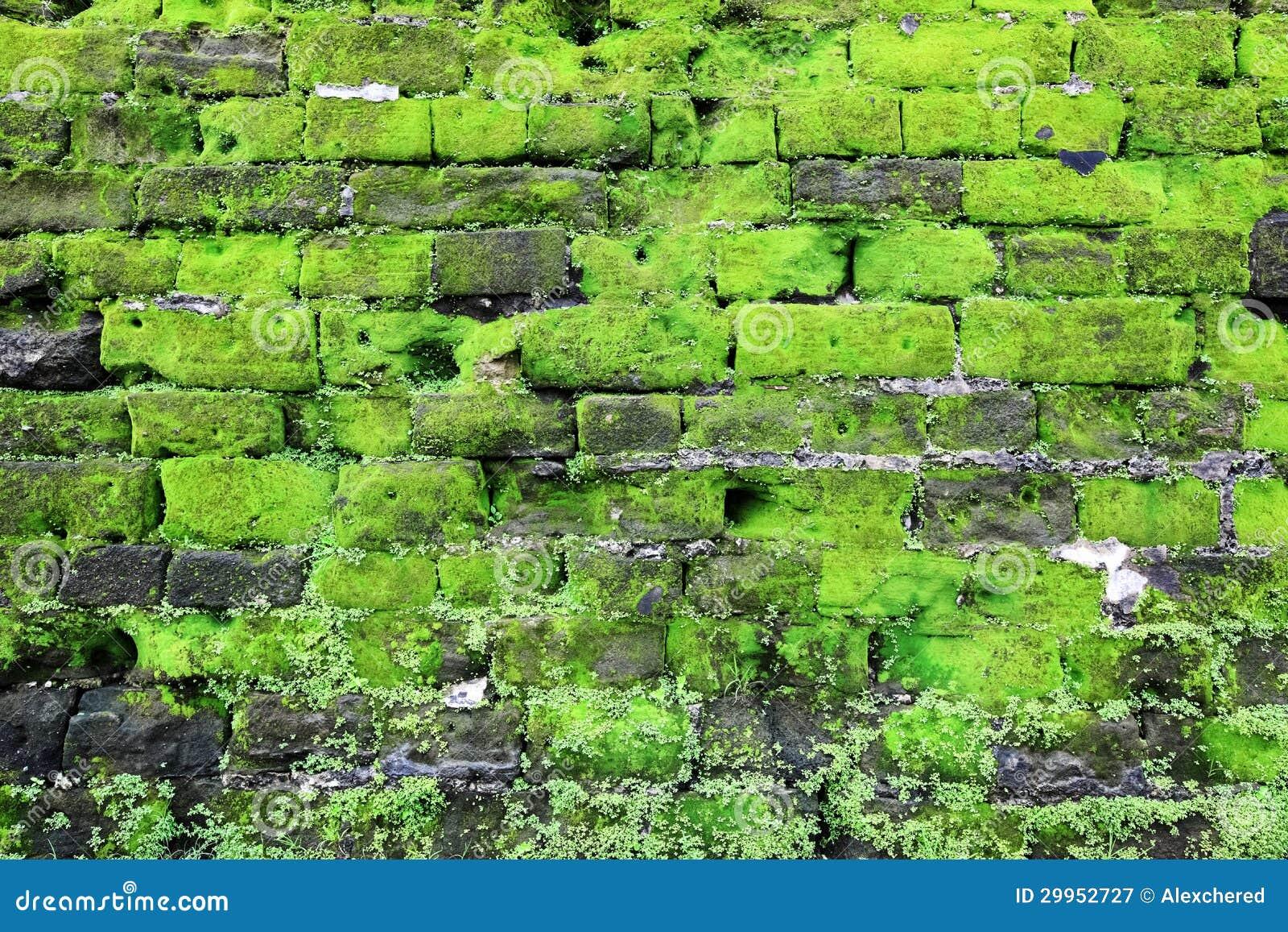 vieux mur en pierre avec de la mousse verte photographie stock libre de droits image 29952727. Black Bedroom Furniture Sets. Home Design Ideas