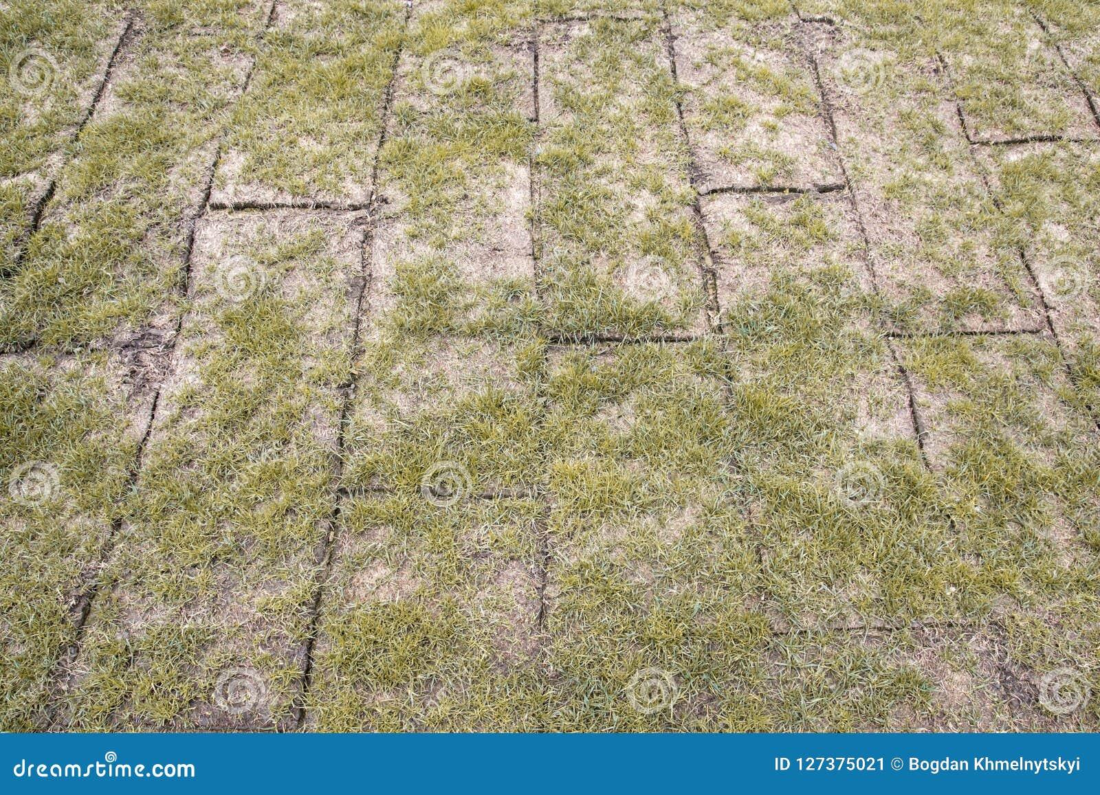 La tierra revelada rueda con la hierba amarilla del otoño, hierba es muy mala